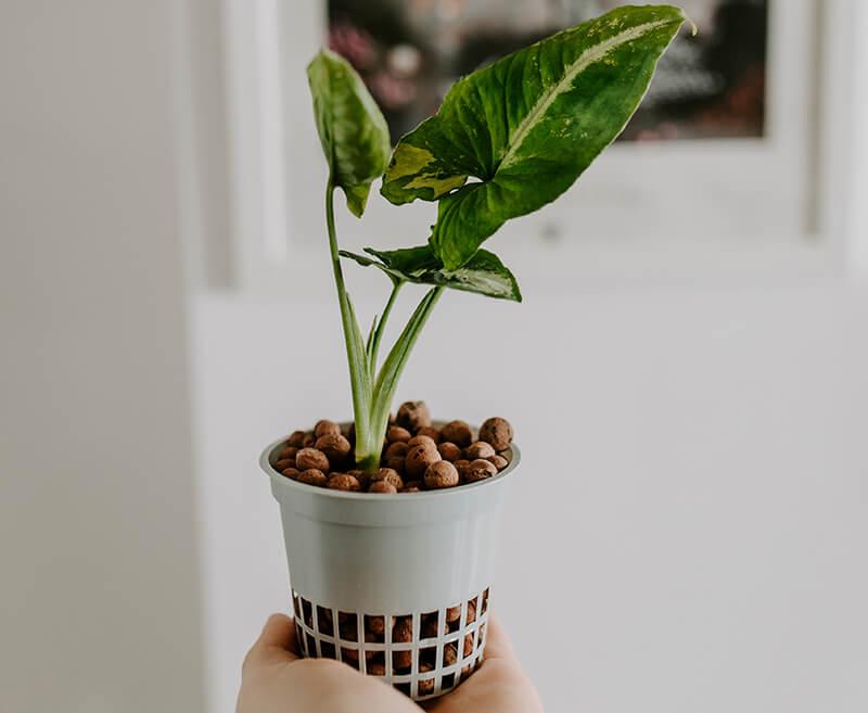 Uprawa w hydroponice efekty (5)